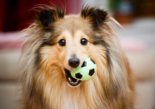 El regalo perfecto para tu perro
