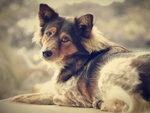 Sé libre de la soledad: ¡adopta un perro!