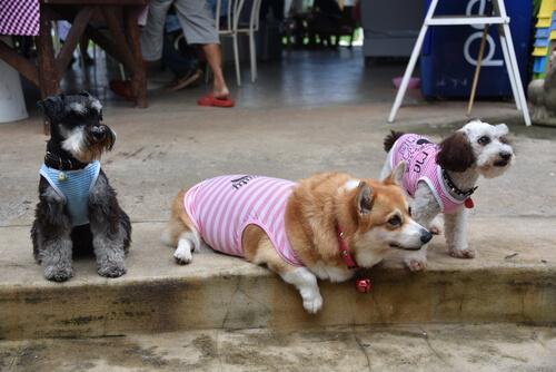 7 razas de perros que te encantarán