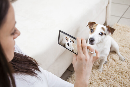 Tomando una foto a un perro