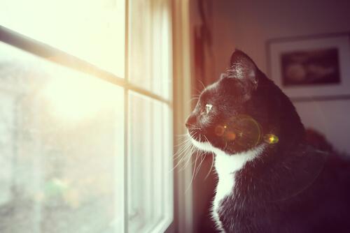 gato es sordo