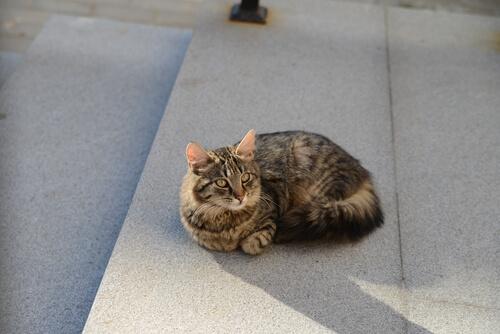Un gato quedó atrapado en el Museo Guggenheim en Bilbao