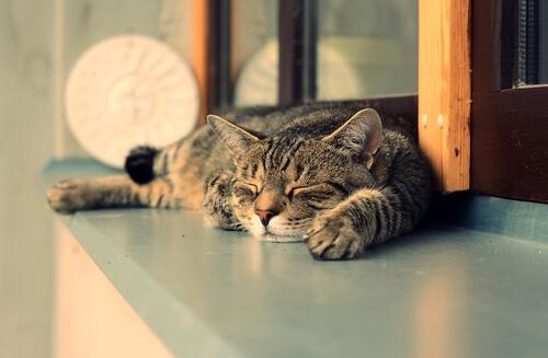 7 razones por las que los gatos duermen más de día que de noche