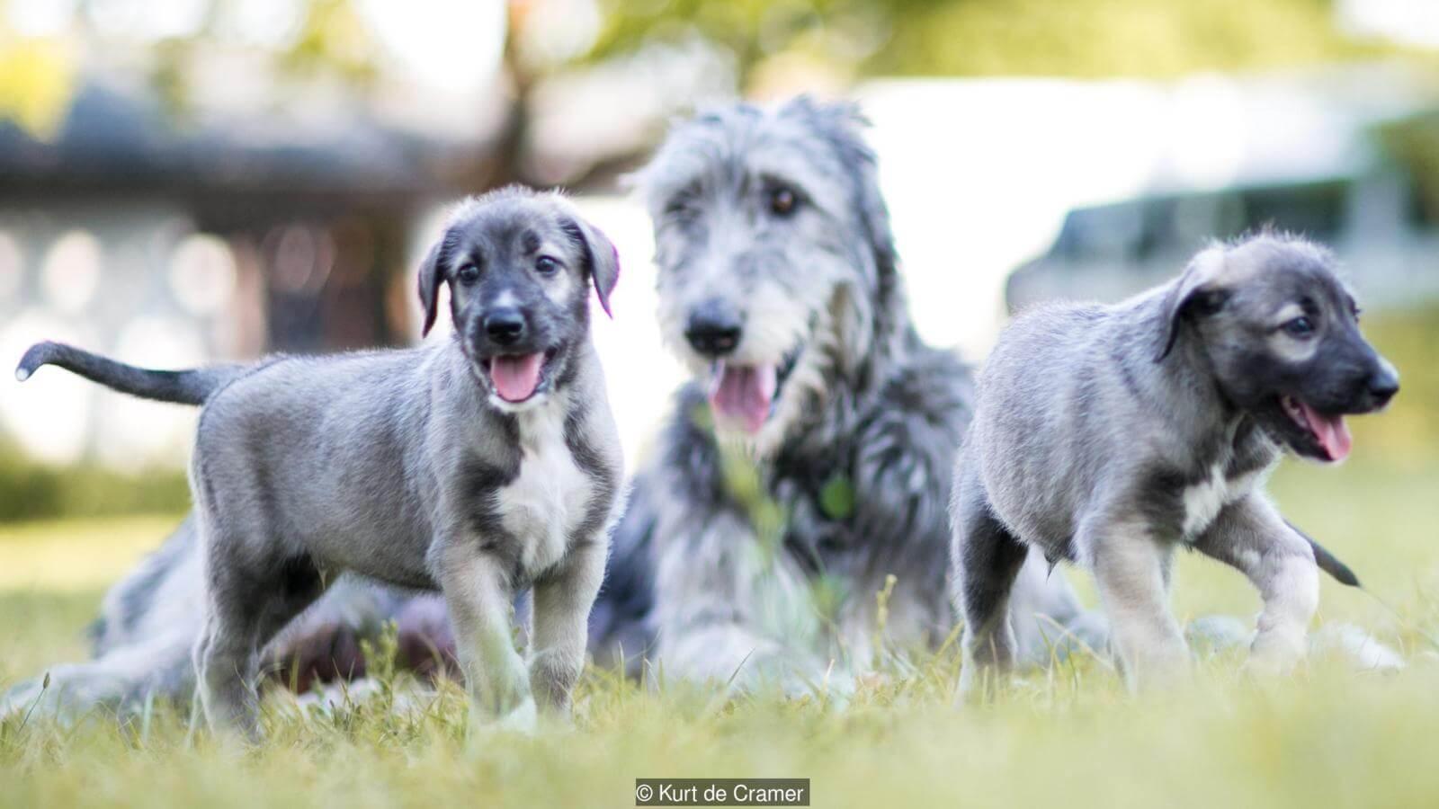 gemelos-identicos-de-perro-3