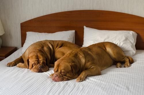 hotel-para-perros