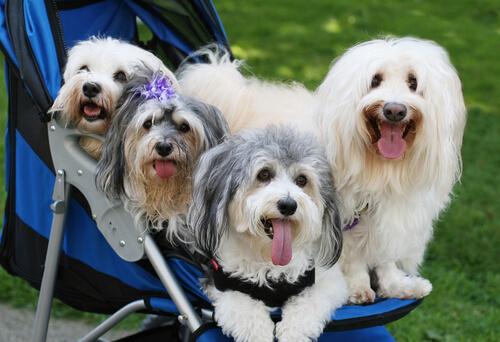 Риски чрезмерной гуманизации вашей собаки