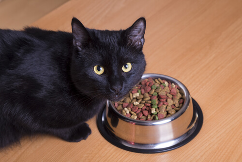 Black cat eating kibble
