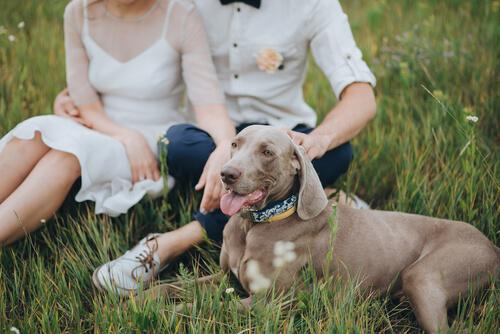 llevar-el-perro-a-tu-boda