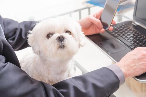 levar cachorro para o trabalho