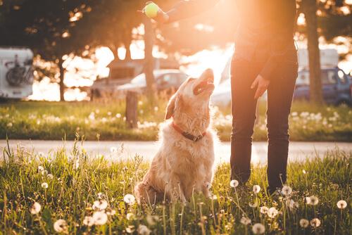 Pros y contras de llevar a tu perro al parque