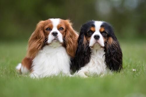 los-mejores-perros-para-una-persona-ocupada