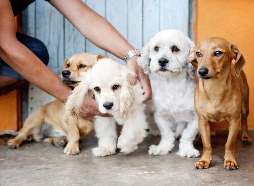 pagar-dinero-por-tu-perro