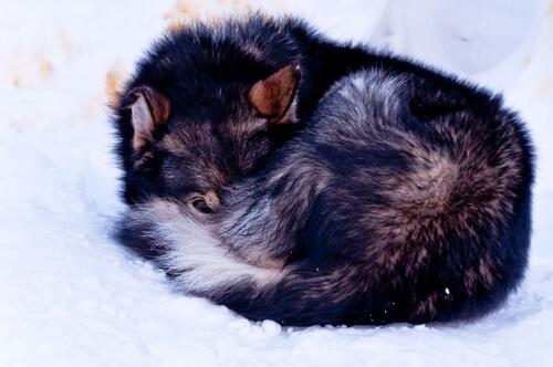 perra-encontrada-en-la-nieve-2