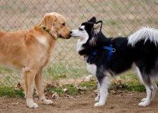 perro-antisocial