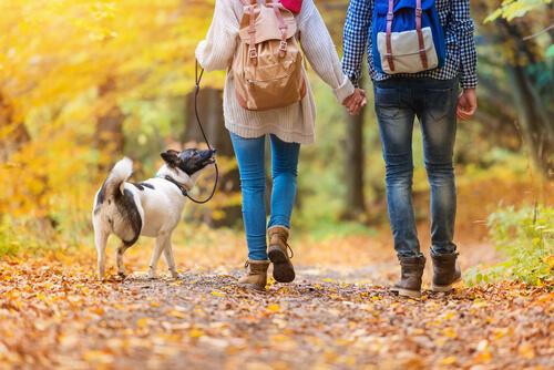 ¿Qué debes llevar en el paseo de tu perro cuando te acompaña a hacer ejercicio?