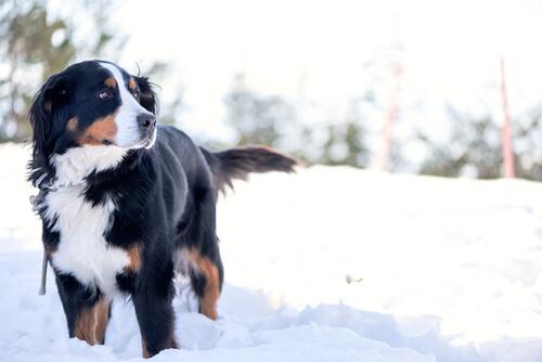 ¡Quiero ir a la nieve con mi perro!