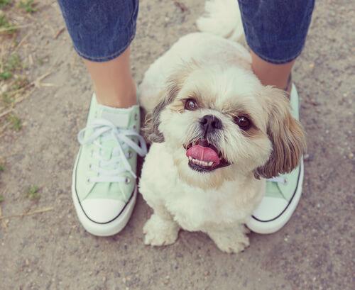 ¿Por qué a los perros les gusta ponerse en nuestros pies?