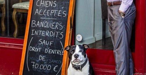 Un restaurante en París permite el ingreso de los perros, pero no de los banqueros