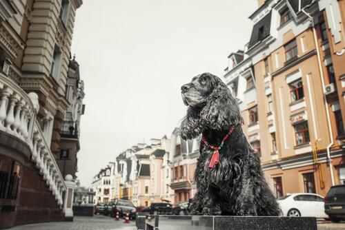 Un nuevo trabajo para tu mascota: perros modelo
