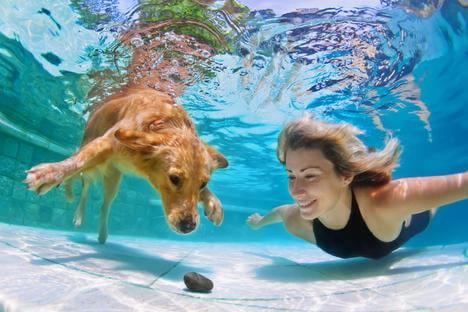 Gracias a un invento ruso los perros podrán respirar bajo el agua