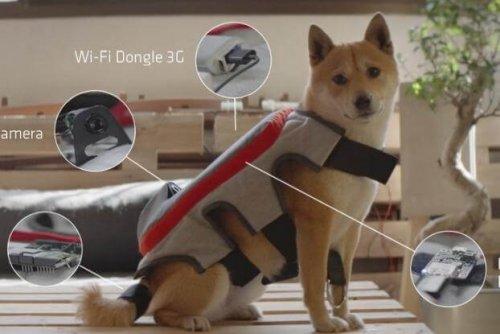 Posting Tail, un dispositivo que detecta la felicidad de tu perro
