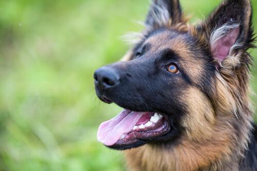 Potencia la autoconfianza en tu perro