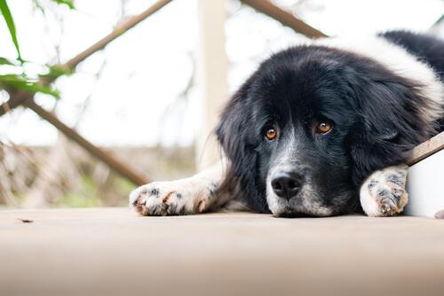 ¿Pueden los perros tener problemas emocionales?