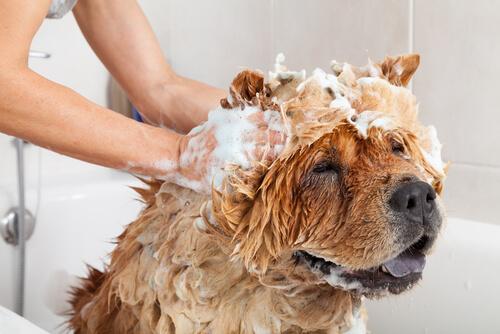 productos de aseo para el perro