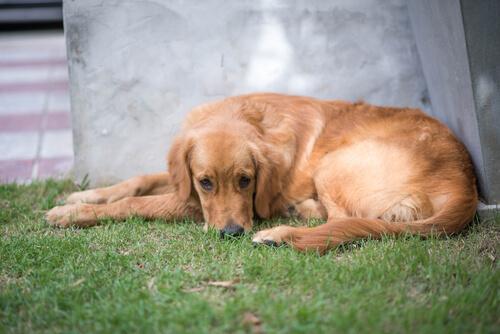 ¿Cómo saber si tu perro necesita un psicólogo?