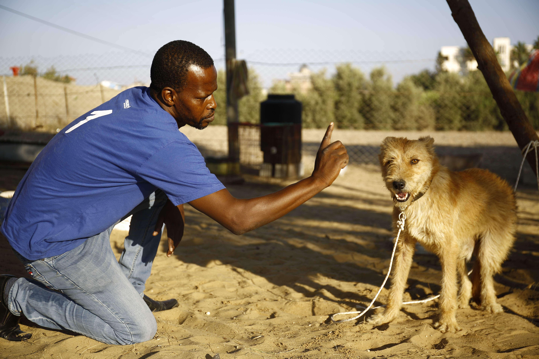 Refugio de perros en gaza