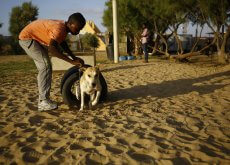 Fuente: www.nacion.com   In an impoverished and war-battered territory suffering food shortages and a scarcity of jobs, Palestinian Saeed al-Ar knew it was a tall order opening a dog shelter in Gaza and he opened the territory's first dog sanctuary in a relatively well-off suburb south of Gaza City. / AFP PHOTO / MOHAMMED ABED