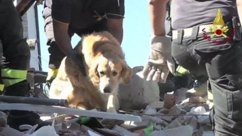 Rescataron a un perro 9 días después del terremoto