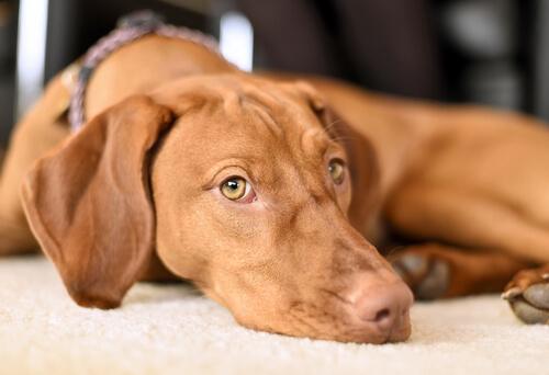 5 consejos para ayudar a tu perro a superar los miedos