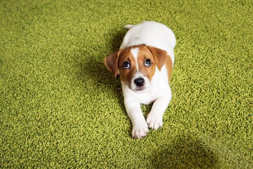 Cuida tu tono al hablar con tu perro