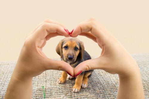 La única meta de tu perro: darte su corazón