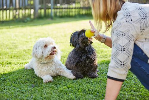Tu perro te querrá más si te entiende