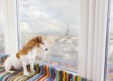 viajar-con-tu-perro-a-paris