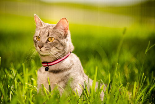Claves para fortalecer el vínculo con tu gato