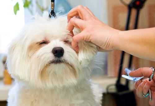 ¿Tu perro tiene el pelo duro? ¡Apúntate a la técnica Stripping!
