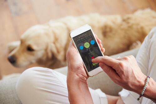 app para animais domésticos