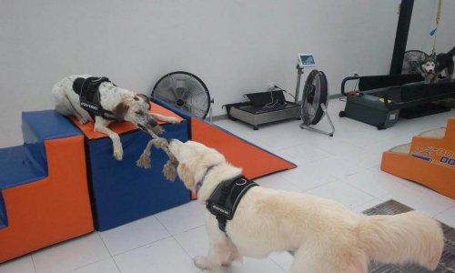 Body Dog, el primer gimnasio para perros
