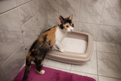 Cajas de arena caseras para gatos