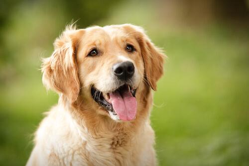 ¿Qué dice tu perro con su cara?