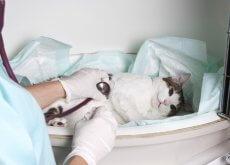 casos-de-emergencia-en-las-veterinarias