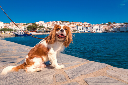 ¿Hay perros de ciudad y de campo?