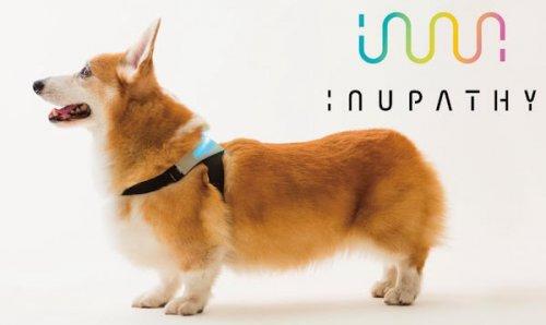 Un collar inteligente que te puede decir cómo se siente tu perro