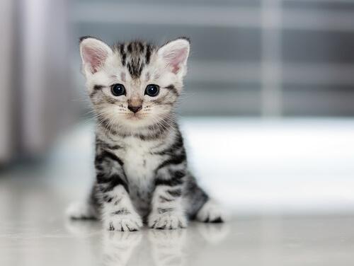 crecen-los-gatos