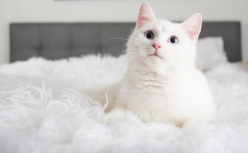 cuando-adoptas-un-gato