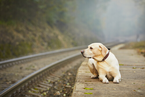 ¿Por qué algunos dueños abandonan a su mascota?