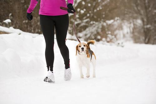 Efecto Lassie: Cómo el perro puede ayudarte a estar en forma